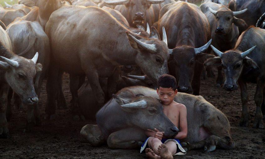 """Syukor""""The Kampung Boy""""dan Kerbaunya: Momen 20 Saat Yang Diambil Dengan Jiwa"""